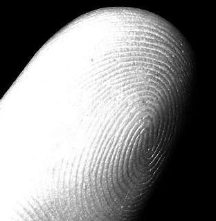 fazen - my fingerprint (index, left hand)