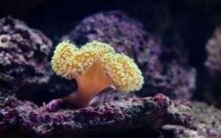 Salvare la barriera corallina con le stampanti 3D