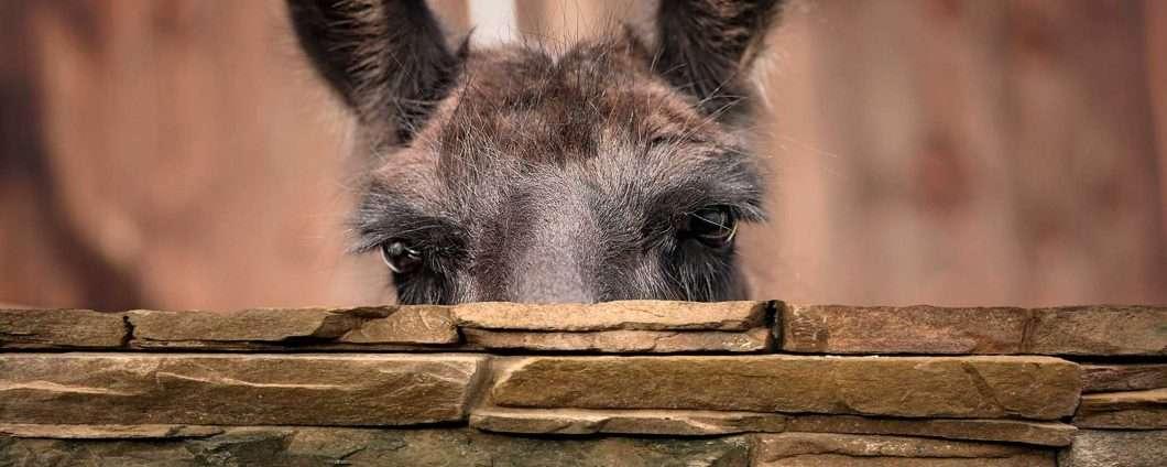 Winamp e lo streaming, la nuova vita del lama