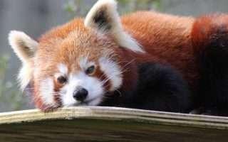 Mozilla dirà addio a Flash con Firefox 69