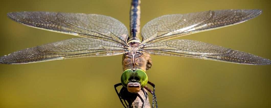 Google non ha abbandonato il progetto Dragonfly?