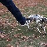 MIT: il robot quadrupede Mini Cheetah fa l'acrobata
