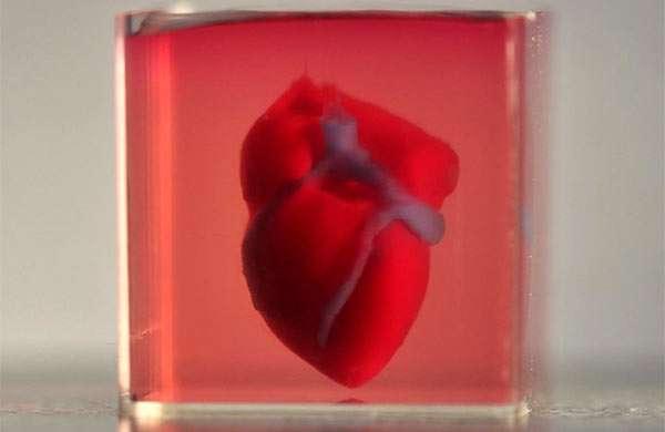 Il cuore stampato in 3D dai ricercatori della Tel Aviv University
