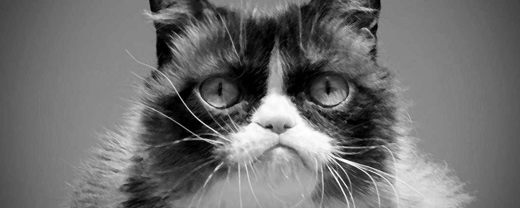 Grumpy Cat è morta: Internet piange il suo meme