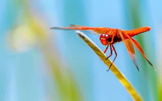 Google: il progetto Dragonfly è stato terminato