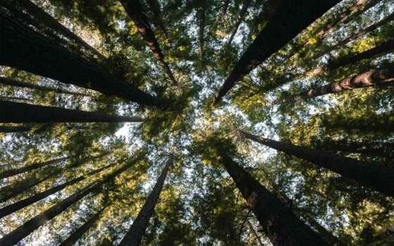 Da Ecosia tre milioni di alberi per l'Amazzonia