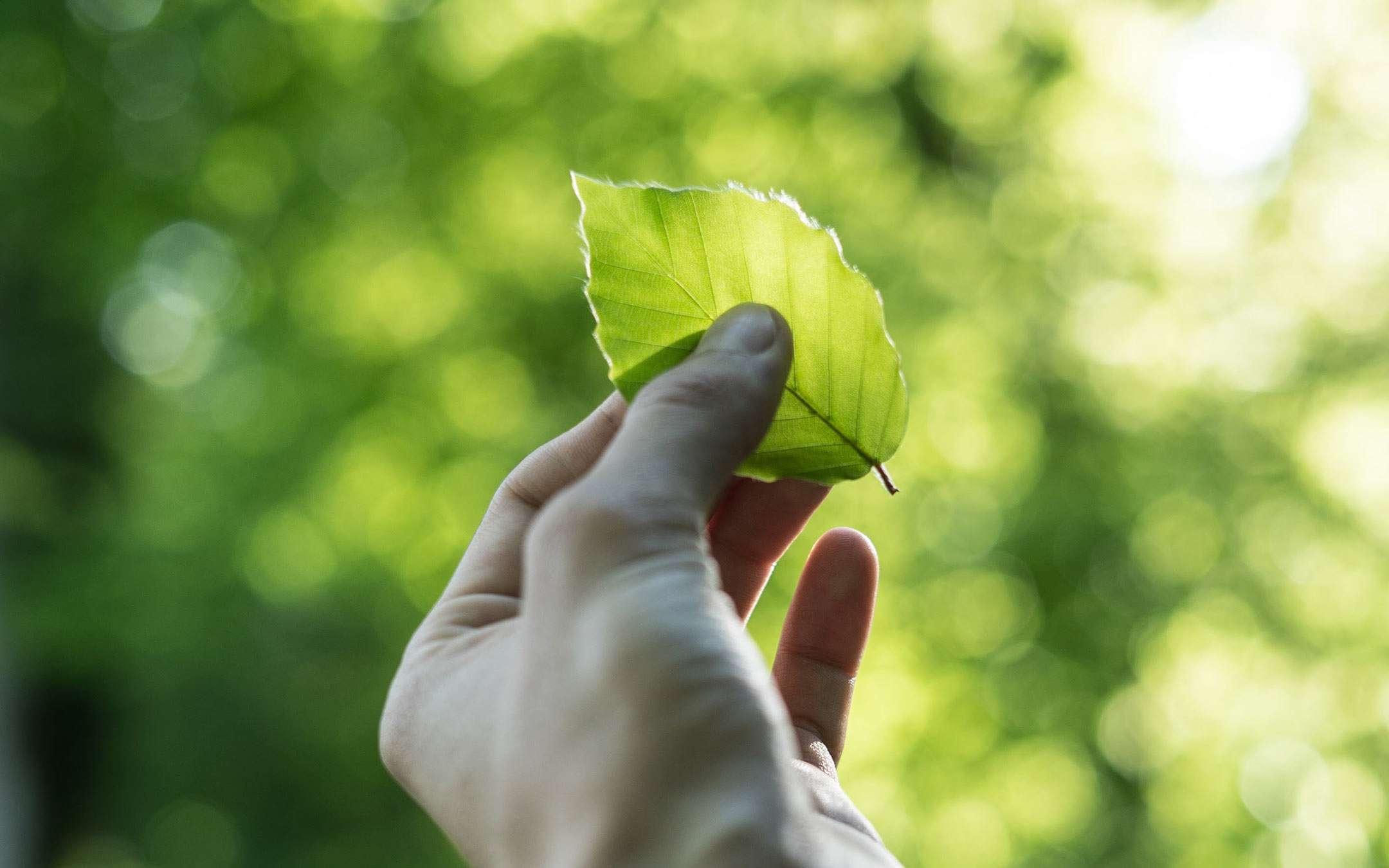 #DigitalRestart: the Alliance for Sustainability