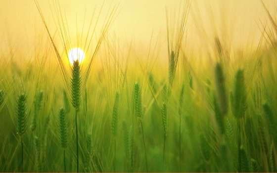 Linkem 4Farm: Smart Agricolture e 5G FWA