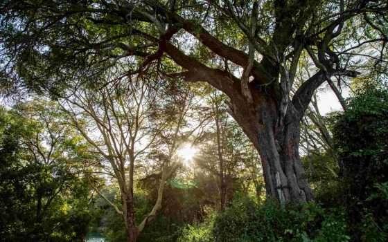 Apple Restore Fund: 200 milioni per le foreste