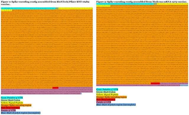 Il codice sorgente del vaccino anti COVID-19 di Moderna