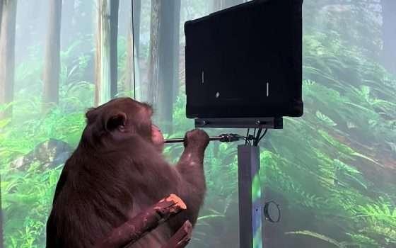 Il macaco gioca a Pong, senza joystick: Neuralink