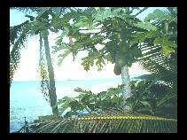 l'Isola di Niue