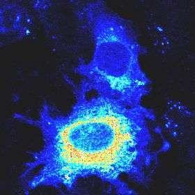 cellule tumorali