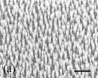 Una matrice di nanotubi in carbonio capaci di funzionare come una sorta di antenna radio per captare la luce visibile