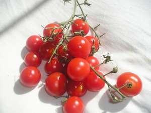 i pomidoro