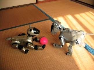 Cuccioli robot