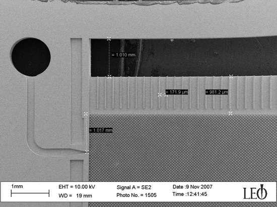 Un'immagine al microscopio