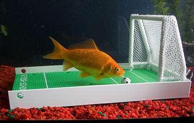 il pesce goleador