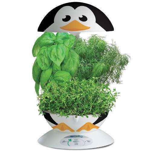 aerogarden penguin