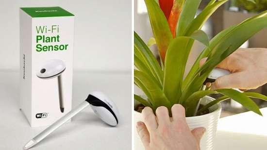 wifi piante